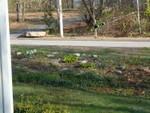 Mound at start of May 2004