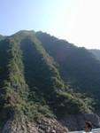 Vegitation over eroding hillside