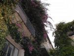 vibrant balconies