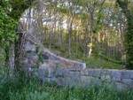 side wall in the forest
