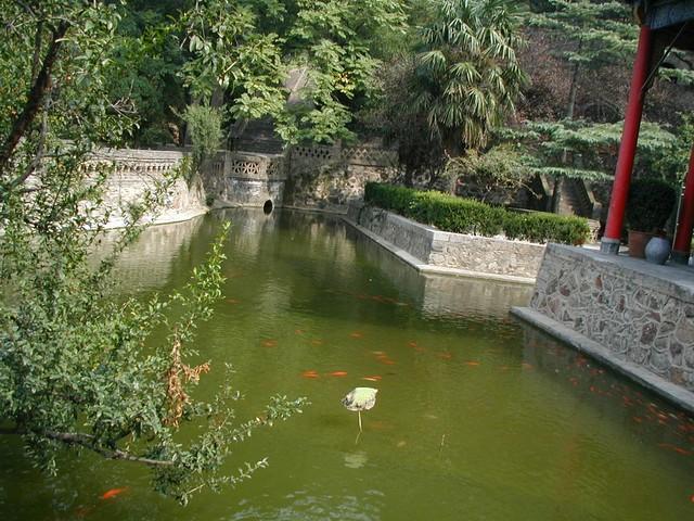 Lush hot springs