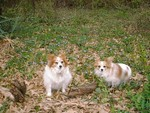 ceasar and cece outside