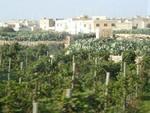 Maltas favorite plant - the cactus