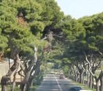 Maltese forest