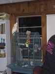 saki-on-cage