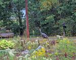 15-Sep-05 - Wild Turkey headed to the mailbox