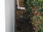 nest that stung the gutter repair guys