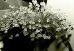 Ren's crystal bouquet